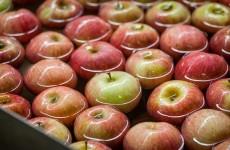 comincia il viaggio delle nostre mele fuji ... in acqua!_melapiu