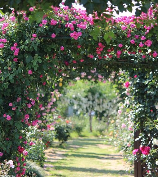 giardini_rose